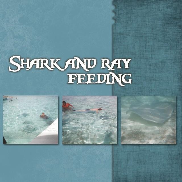 shark_page 1